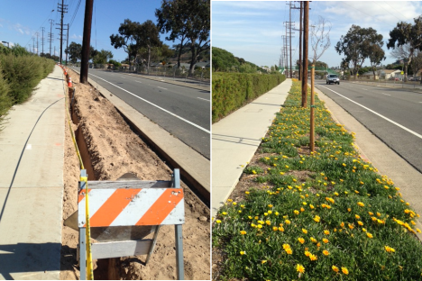 Landscaping along PCH, during construction, and after.